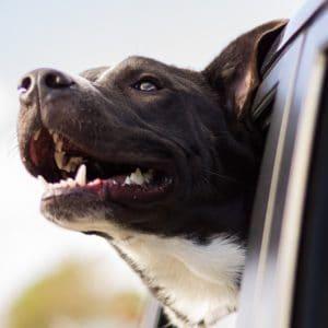 Dog with shiny teeth